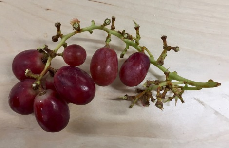 Dean brought grapes