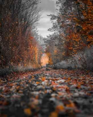 pexels-photo-1591447
